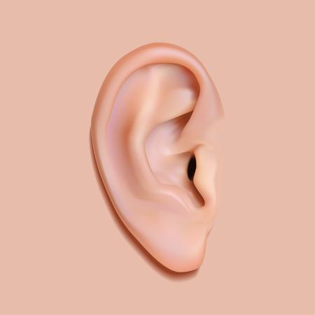 oido: Ilustraci�n vectorial imagen fotorrealista del o�do humano. Aislado