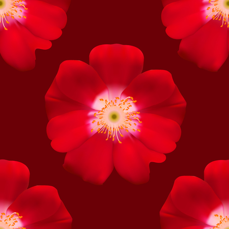 primula: Seamless floral background isolated of Red Primula. Vector Illustration Illustration