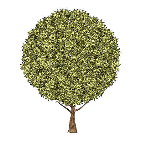 flower white: Tree with leaves and flowers. Vector. Hand drawn.