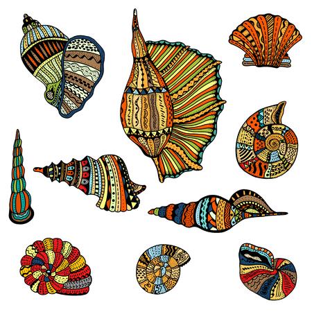 Seashell set collection. Vector illustration.