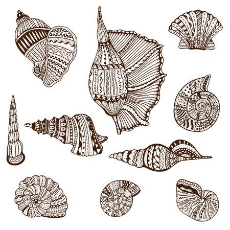 Seashell conjunto de la colección. Ilustración del vector. Ilustración de vector