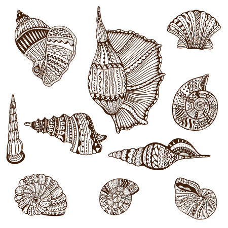 Seashell set collection. Vector illustration. Vetores