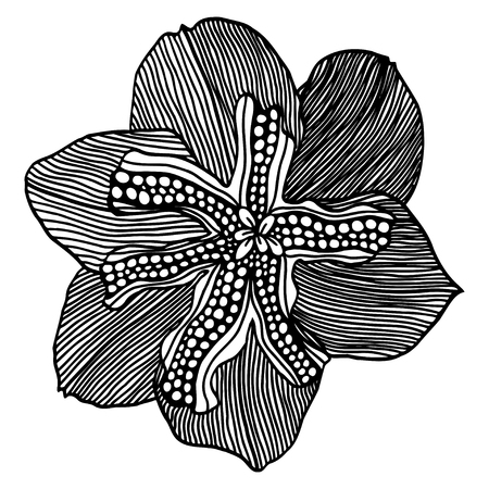 Vector sketch of flower narcissus. Hand draw illustration.