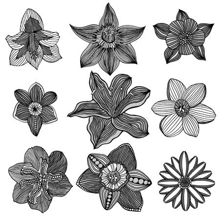 ornamental design: Set of sketchy Monochrome abstract doodle flowers. Vector illustration. Hand drawn sketch. Isolated on white.