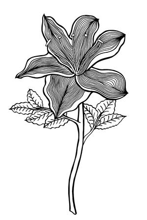 Monochrome Hand drawn esquisse fleur. Vecteur isolé sur blanc