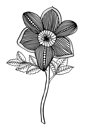 jonquil: Monochrome Hand drawn Flower sketch. Vector Isolated on white Illustration