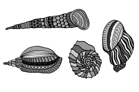mollusk: Set of shells. Hand Drawn aquatic doodle vector illustration. Sketch for tattoo or makhenda. Seashell collection. Ocean life.