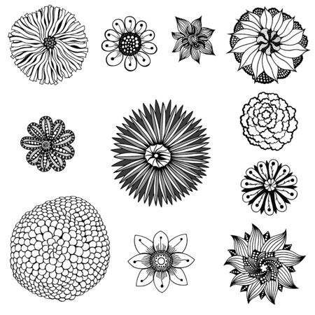 designe: Monochrome Set of flowers. Floral elements. vector illustration imsge. Isolated on white