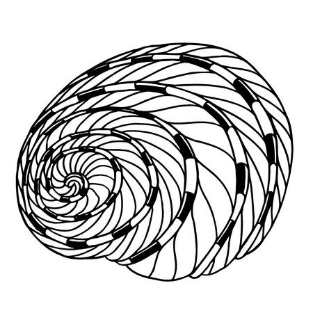 aquatic life: Black sea cockleshell. Hand Drawn aquatic doodle vector illustration. Sketch for tattoo or makhenda. Seashell collection. Ocean life. Illustration