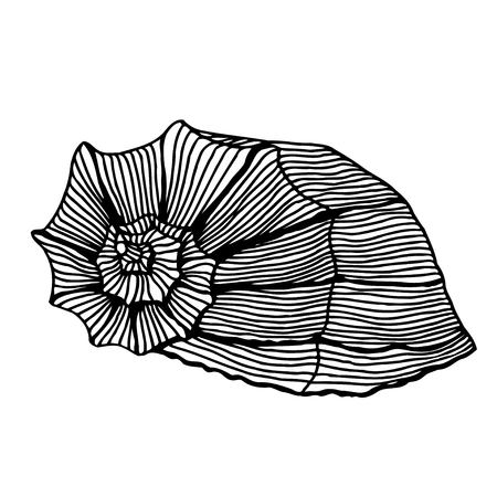 aquatic: Black sea cockleshell. Hand Drawn aquatic doodle vector illustration. Sketch for tattoo or makhenda. Seashell collection. Ocean life. Illustration