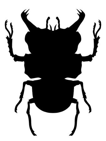firebug: True bug silhouette. Black and white vector illustration Illustration