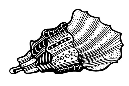 aquatic life: Hand Drawn seashell. aquatic doodle vector illustration. Sketch for tattoo or makhenda. Seashell collection. Ocean life.