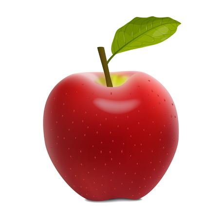 Detailed red apple. Vector illustration image. Isolated on white