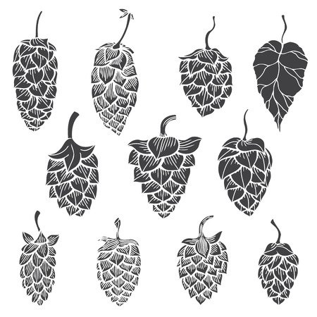 Set of Hops plant - Vector silhouettes isolated on white Çizim