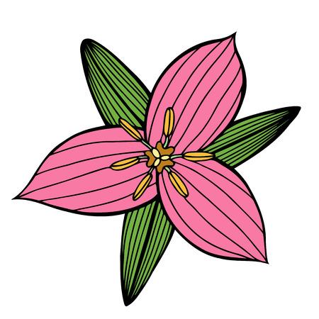 dahlia: Hermosa flor rosa aislado sobre fondo blanco. Para las tarjetas de felicitación y las invitaciones de la boda, el cumpleaños, el día de tarjeta del día de San Valentín, el día de madre y otros días de fiesta estacionales Vectores