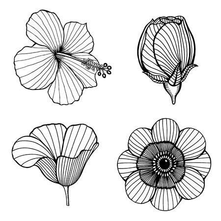 nymphaea: Vector set of hand drawn lotus flowers. Sketch floral botany collection in graphic black and white style Illustration