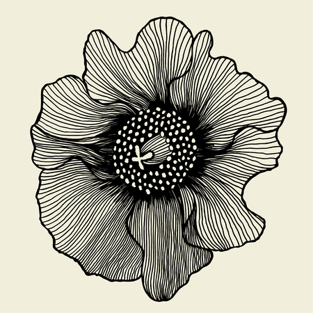 mother s day: poppy flower. isolated for greeting cards and invitations of the wedding, birthday, Valentine s Day, mother s day and other seasonal holidays