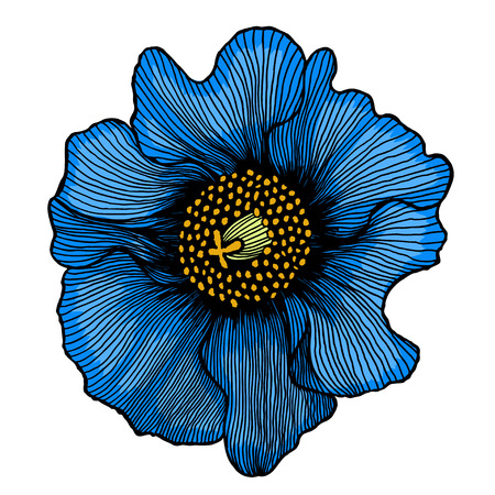beautiful blue flower isolated on white background. for greeting cards and invitations of the wedding, birthday, Valentine s Day, mother s day and other seasonal holidays