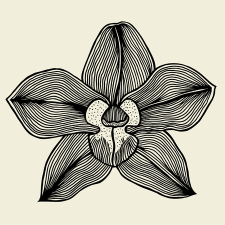 floral orchid vintage drawing vector illustration isolated Illustration