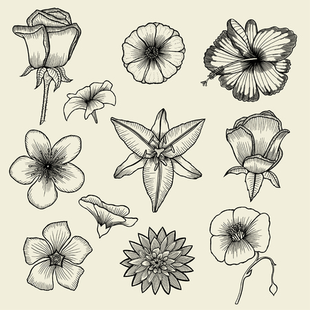 ink sketch: Set of hand drawn flowers, vintage sketch,victorian retro style, romantic decoration, engraving, ink illustration. Vector illustration of several english roses with leaves and buds. Illustration