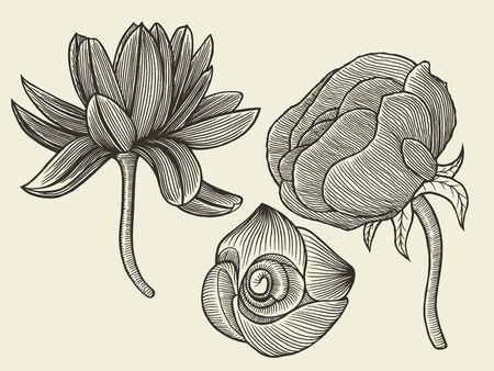 pulsatilla: Hand drawn sketch flowers, floral pattern Vector illustration