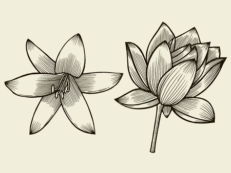 Flowers. Hand drawn sketch flower lily and water lily. Vector illustration