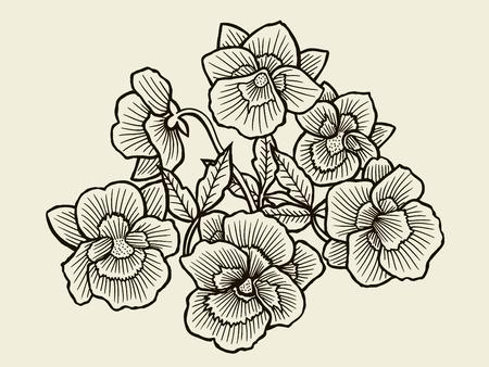 composition art: Vector sketch of Orchid flower blossom. Hand drawn illustration Illustration
