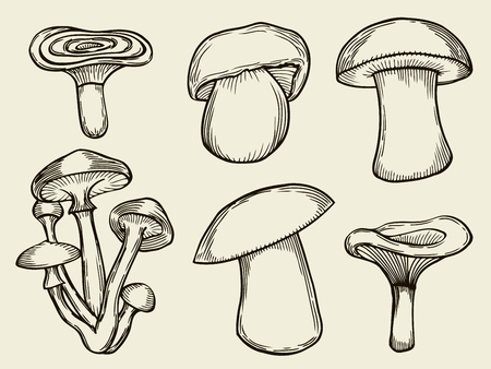 fiambres: Recopilación de las ilustraciones de vectores de setas que se recogen en el bosque