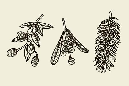 Vecteur défini avec des plantes de Noël. Illustration botanique Branche de houx, d'épicéa, de pin. Éléments de design isolés sur fond beige. Style de gravure.