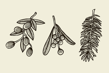 Vector set with Christmas plants. Botanical illustration. Branch of holly, spruce, pine. Design elements isolated on beige background. Engraving style.