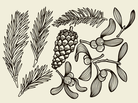 christmas flower: Vector set with Christmas plants. Botanical illustration. Branch of holly, spruce, pine, Christmas flower. Design elements isolated on beige background. Engraving style.