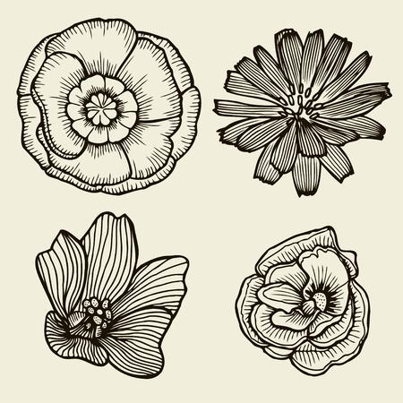 jonquil: Flowers. Hand drawn sketch flower gerbera, water lily. Vector illustration Illustration