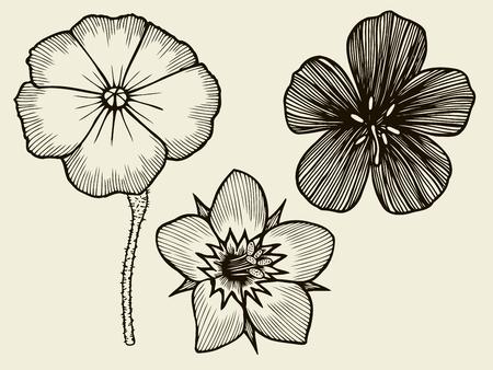 gerbera: Flowers. Hand drawn sketch flower gerbera, water lily. Vector illustration Illustration