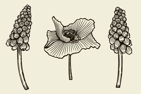 Sketch of wild flowers, hand drawn isolated on a beige background. Illustration