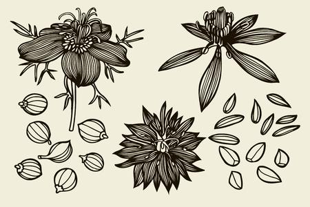 insieme Sketch di Nigella sativa fiori e foglie isolati su sfondo bianco. fiori Outline sono elemento di design. disegnato a mano linee di contorno. illustrazione di vettore