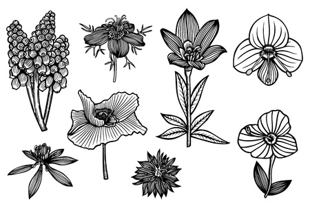 Line Drawing Flower Vector : The vector drawing of different wild flowers. royalty free
