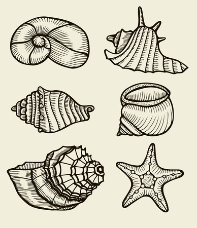 cockleshell: Seashells hand drawn set. Sketch design elements