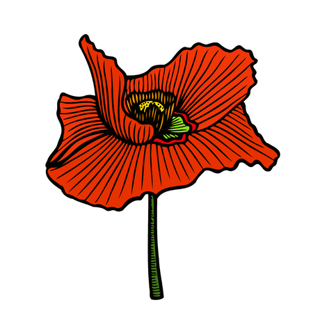 corn poppy: summer floral bouquet with red poppies. hand drawing sketch on white background