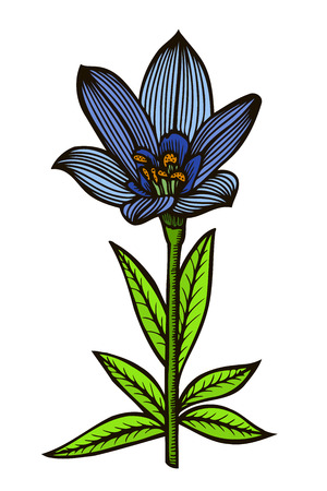 blue spotty lily. Vector illustration isolated on white Illustration