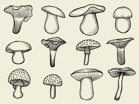 compilation: Compilation of vector illustrations of mushrooms collected in the forest