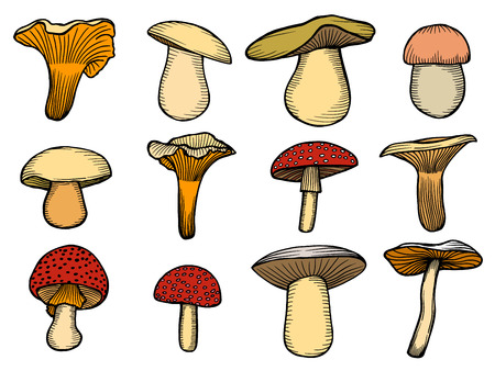 morel: Vector illustration with set of mushrooms in sketch style.