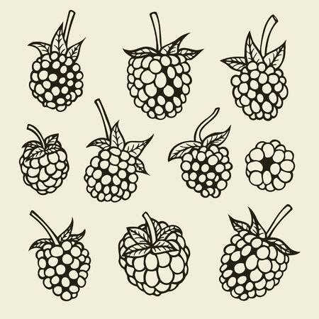 Blackberry hand drawn sketch. Vector illustration image Vetores