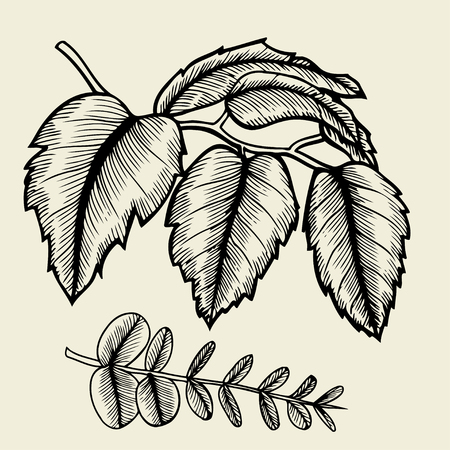 bage: Hand drawn branches and leaves of plants. isolated on bage background.