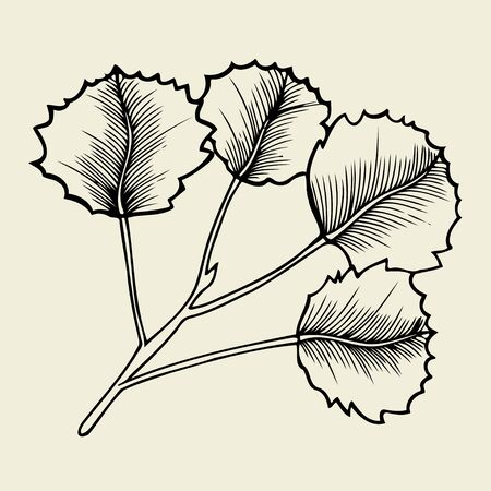 Hand drawn branches and leaves of plants. isolated on bage background.