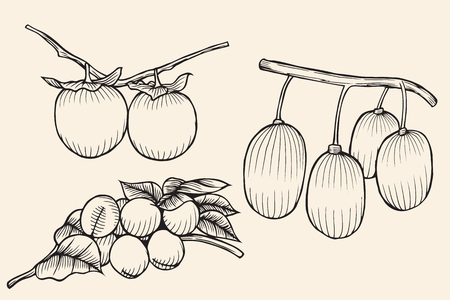 persimmon: set isolated fruit Apricots, persimmons. Isolatedon beige