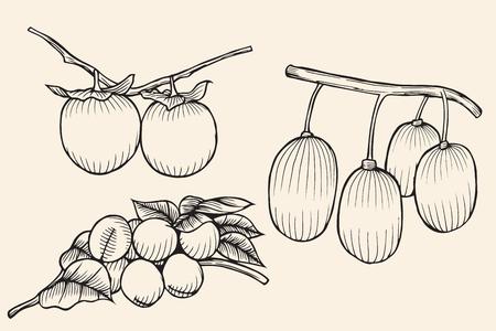 set isolated fruit Apricots, persimmons. Isolatedon beige
