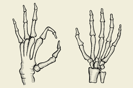 set of Skeleton hand, vector illustration isolated on beige