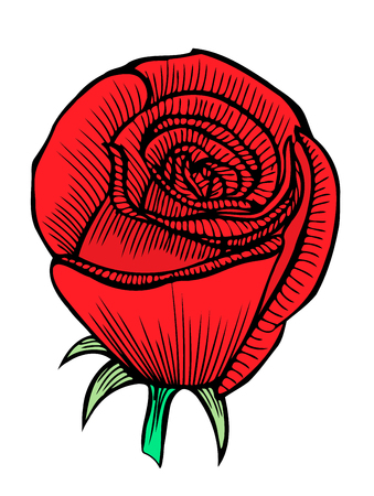 nature one painted: One red rose. Wedding drawing. Greeting card. Vector hand drawn illustration.