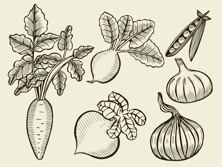 garden peas: Vegetable Set. Sketch of Onions, garlic, radish, beets, peas