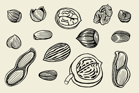 brazil nut: Vector hand drawn nuts set. Engraved collection.